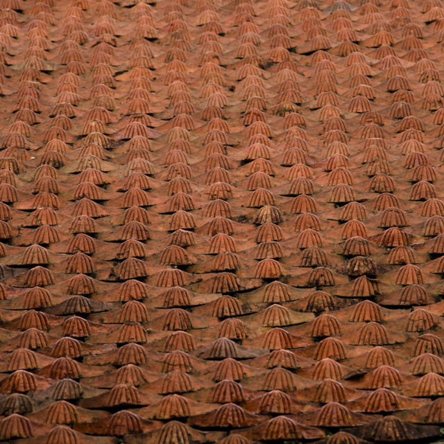 """Roof tiles"" stock image"