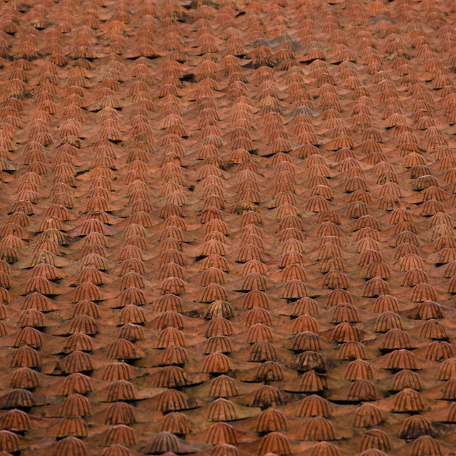 """Roof tiles, 2"" stock image"