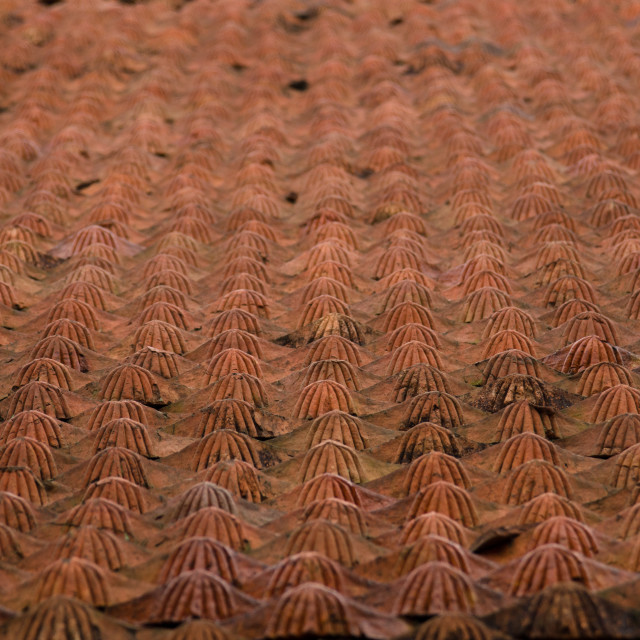 """Roof tiles, 3"" stock image"