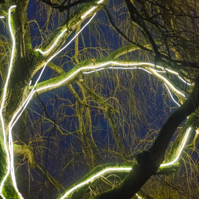 """Electric Tree"" stock image"