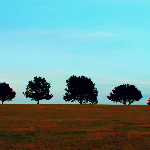 """Row of trees beside Hill Barn golf club, Worthing."" stock image"