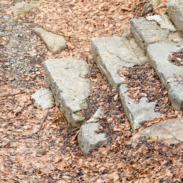 """""""steps and brown leaves"""" stock image"""