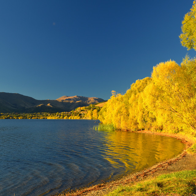 """Fall Colours - Lake Hayes, New Zealand"" stock image"