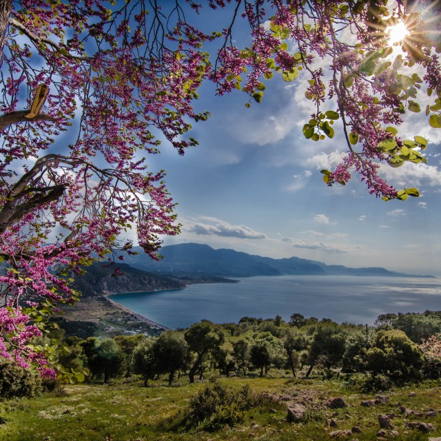 """""""A beautiful Spring day"""" stock image"""
