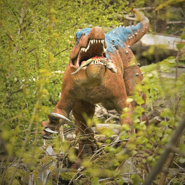 """hungry raptor"" stock image"