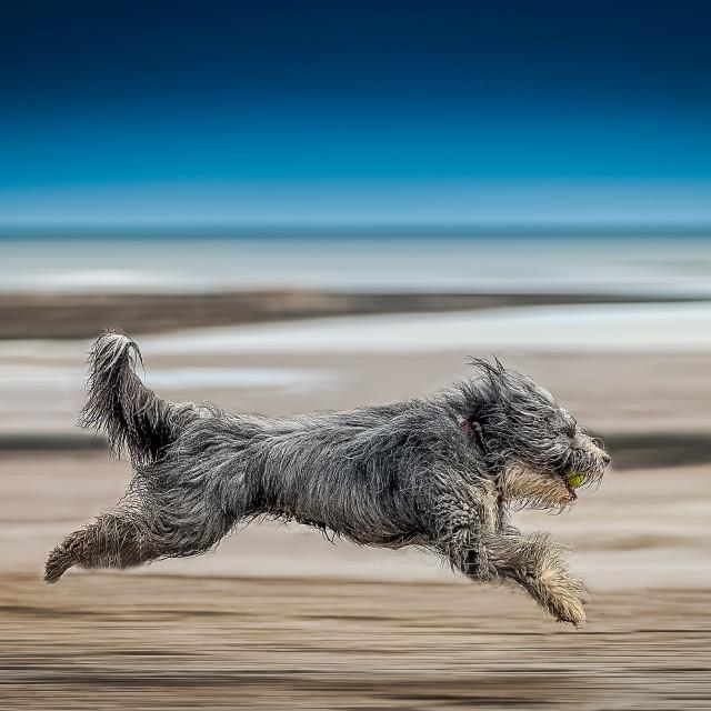 """Dougaldo Sand Surfing"" stock image"