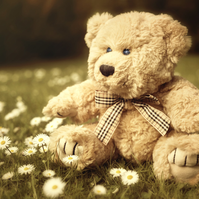 """Teddy Bear in the garden"" stock image"