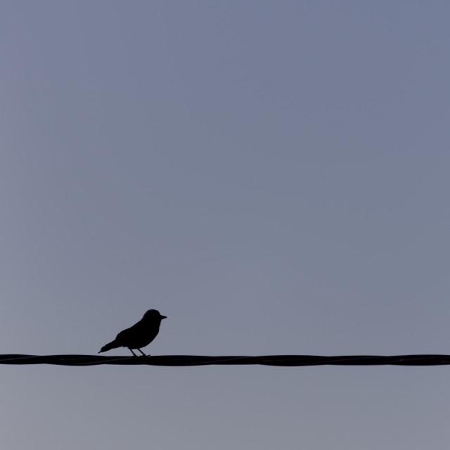 """Black bird on the line"" stock image"