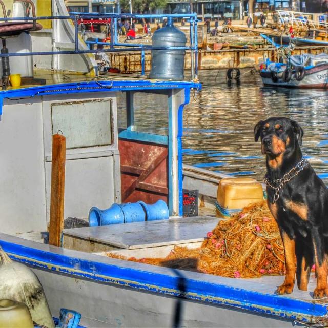 """A Guard Dog - Antalya, Turkey"" stock image"