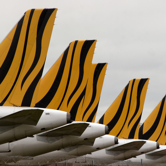 """Tiger Tails"" stock image"