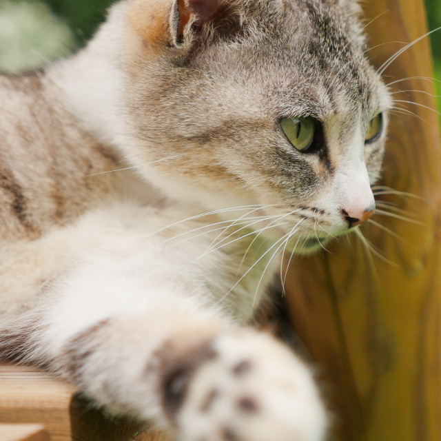 """Portrait Of Cat Outdoors"" stock image"