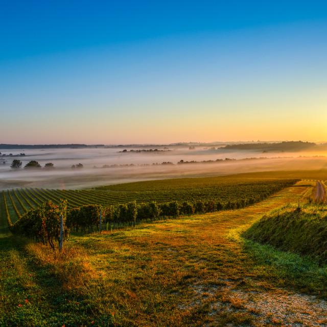 """""""Castle in Bordeaux Vineyard Sunrise"""" stock image"""