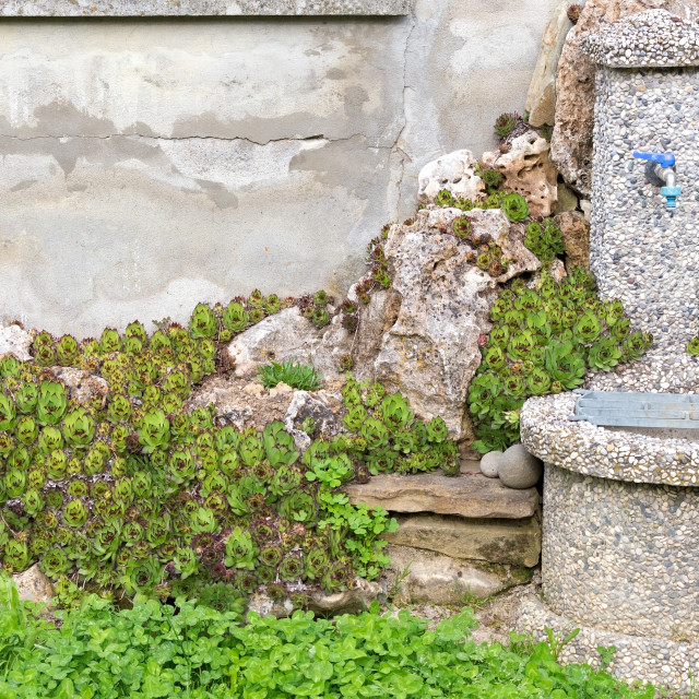 """""""old fountain in the green"""" stock image"""