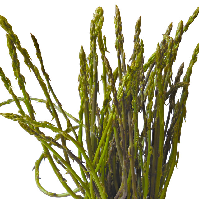 """A bunch of freshly picked wild asparagus"" stock image"