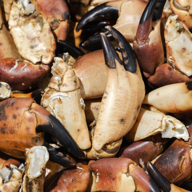 """Crab claws"" stock image"