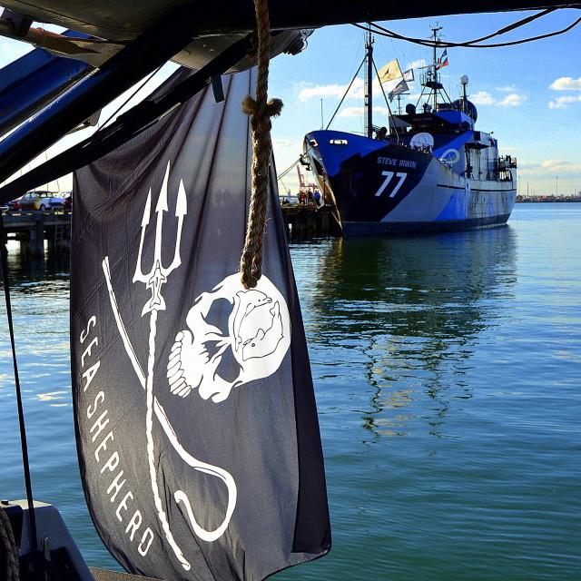 """""""Sea Shepherd Fleet"""" stock image"""