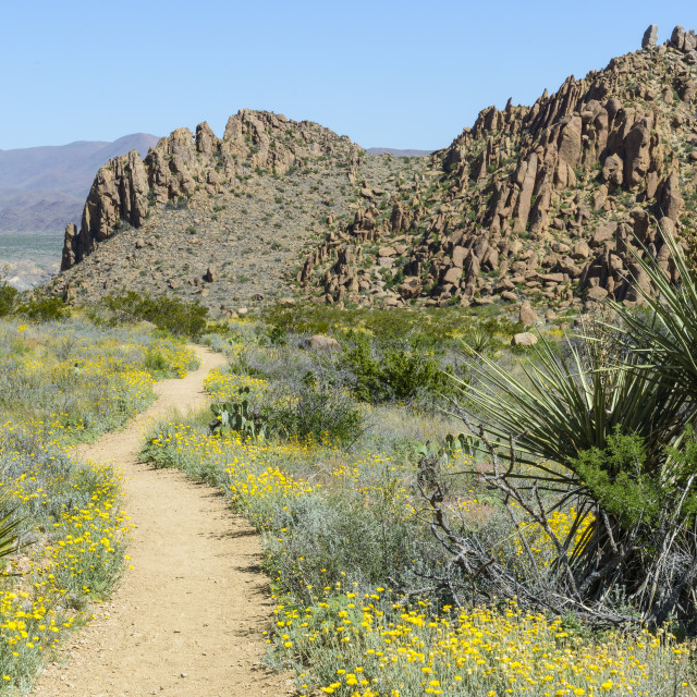 """Big Bend Trail"" stock image"