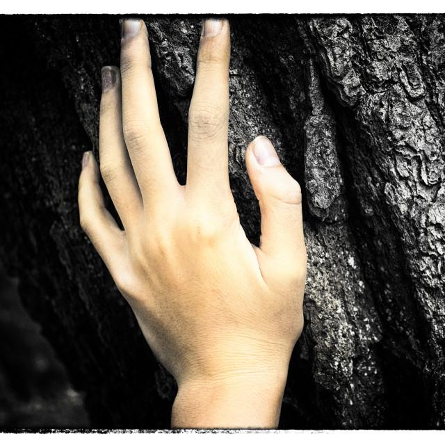 """Hand on Tree"" stock image"