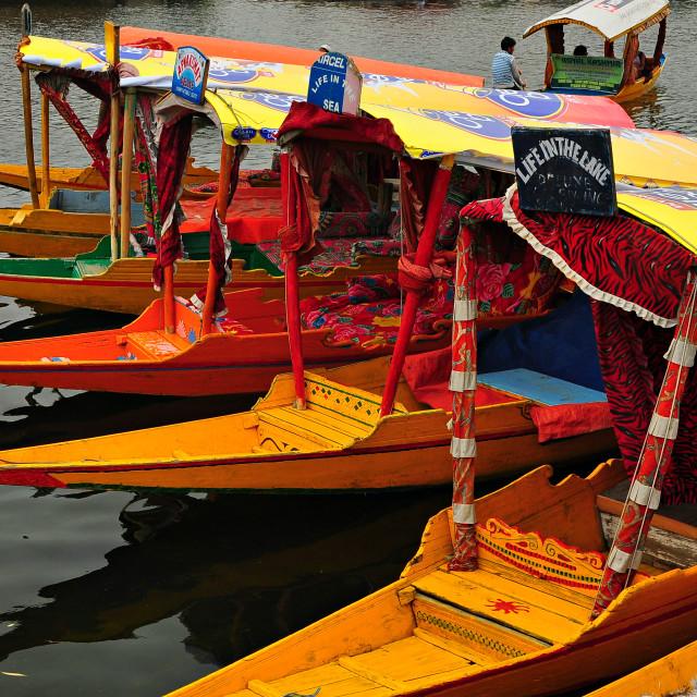"""""""Shikaras - Dal Lake, Srinagar, Kashmir"""" stock image"""