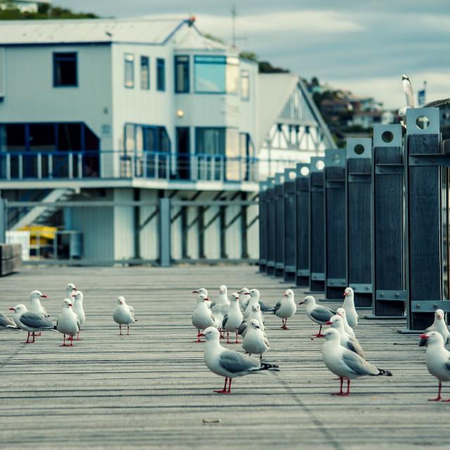 """Flock of Seagulls - Nelson, New Zealand"" stock image"