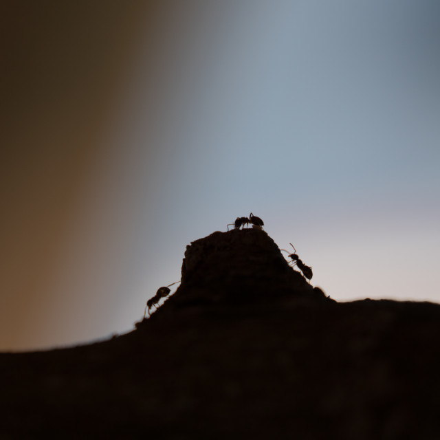 """Ant Hill"" stock image"