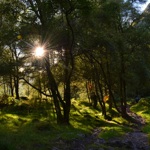 """Sunlit trees"" stock image"