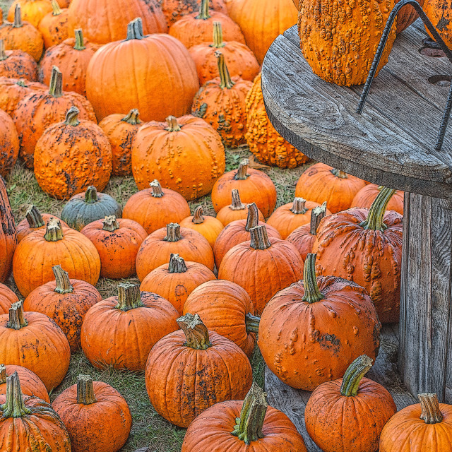 """Pumpkins"" stock image"