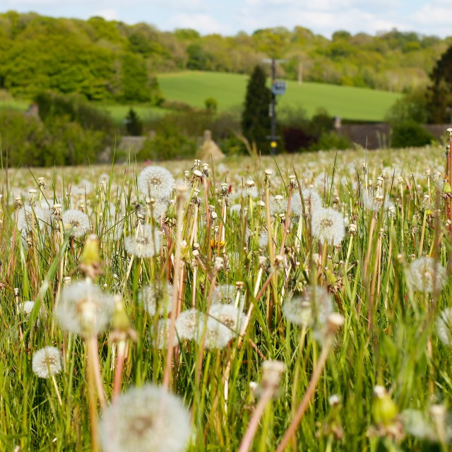 """""""Spring Summer Meadow"""" stock image"""