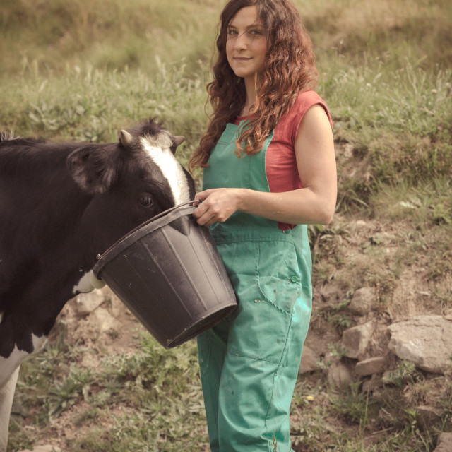 """Farmer feeding cows"" stock image"