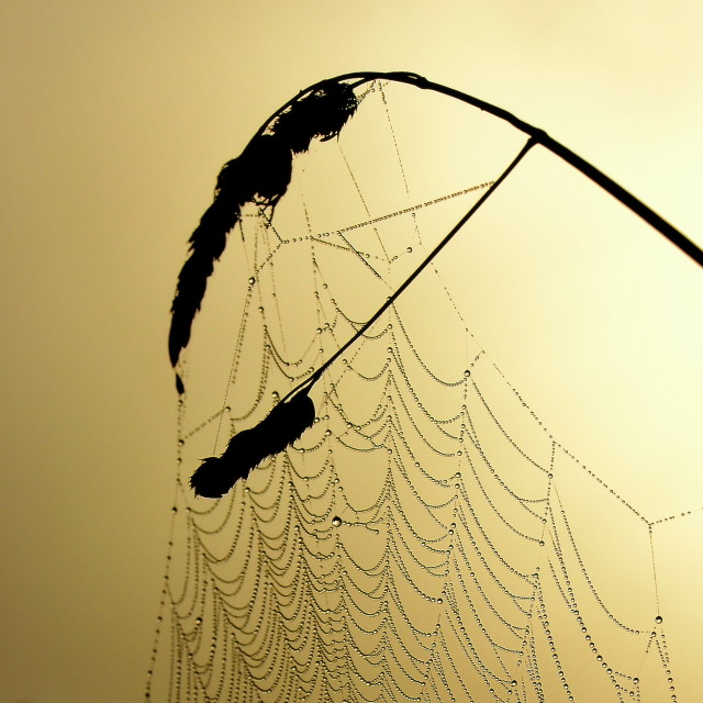 """Spidernet"" stock image"