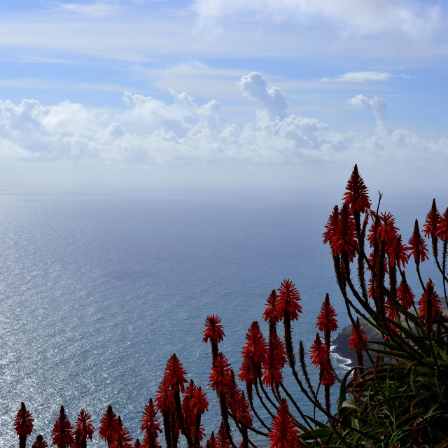 """Flowers in Madeira"" stock image"