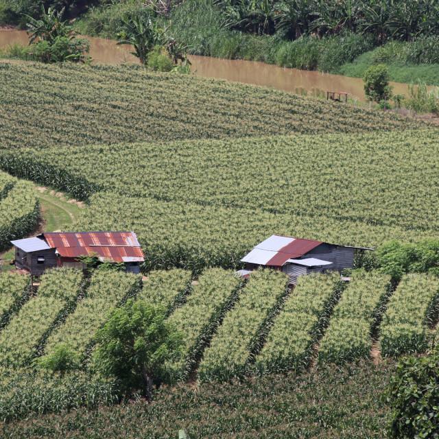 """Borneo Landscape"" stock image"