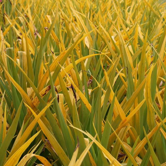 """Yellow and Green foliage"" stock image"