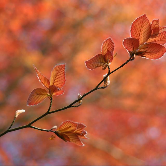 """""""Its Autumn - New Zealand"""" stock image"""