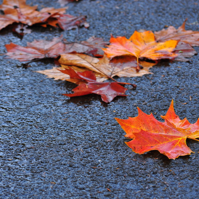 """Fallen - Autumn Leaves, New Zealand"" stock image"