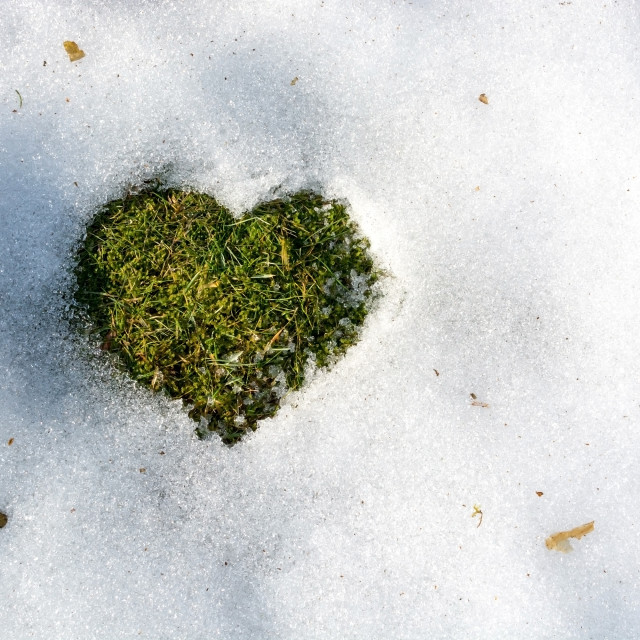 """Snow melting in the shape of a heart"" stock image"