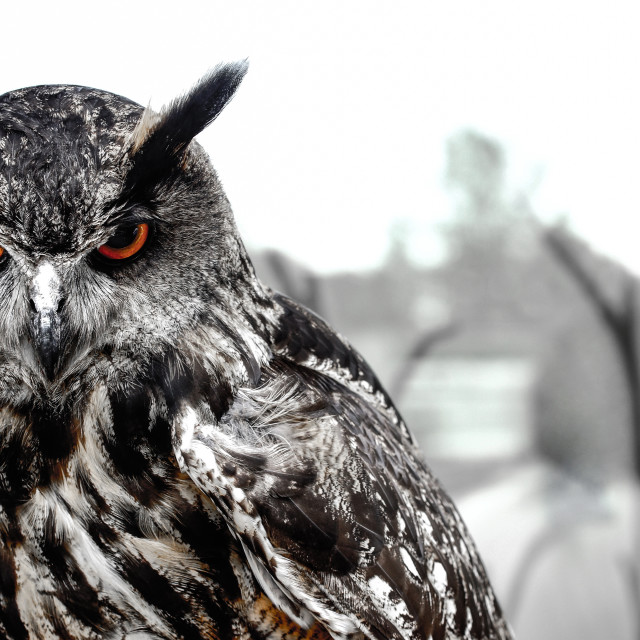 """Mean looking Owl"" stock image"