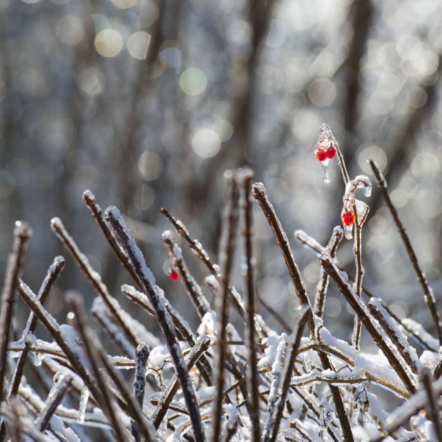 """""""Ice Storm 2013"""" stock image"""