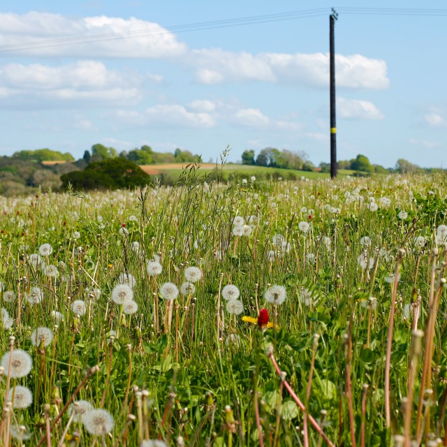"""""""Cotswold Village Spring Summer Meadow"""" stock image"""