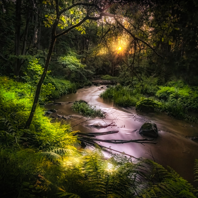 """Forest creek"" stock image"