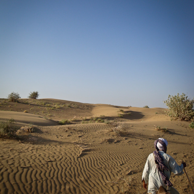 """""""The view from the camel, Rajasthan"""" stock image"""