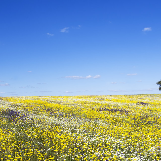 """Field of Alentejo region at Spring time"" stock image"