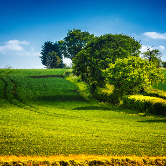 """Idyllic English Country Scene"" stock image"