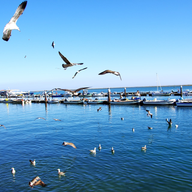 """""""Seagulls flying in the sky over the harbor of Olhao"""" stock image"""