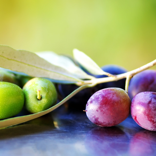 """Ripe Olives, olives in olive tree branch"" stock image"