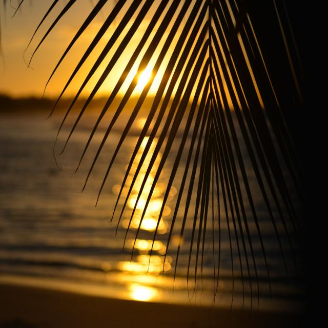 """Palm tree leaf against sunset at Jobos beach. Isabela, Puerto Rico."" stock image"