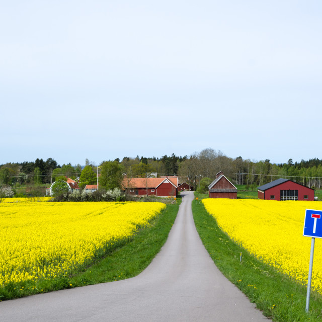 """Swedish spring landscape"" stock image"
