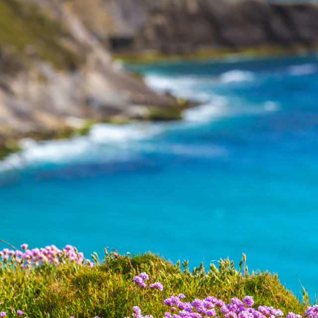 """Beauty On a Cliff Edge"" stock image"