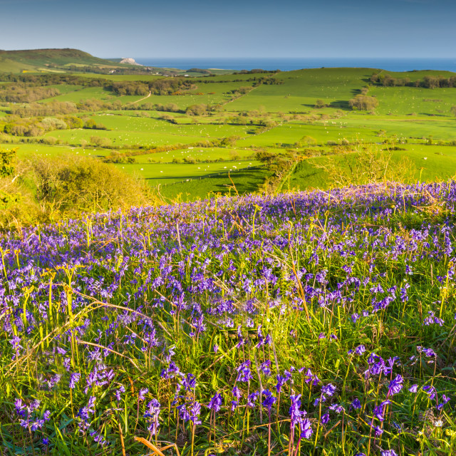 """BlueBell View"" stock image"