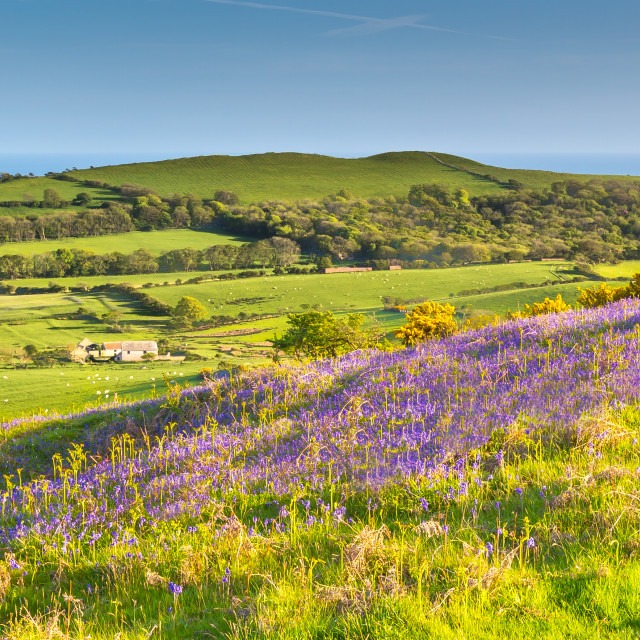 """BlueBell Hill"" stock image"